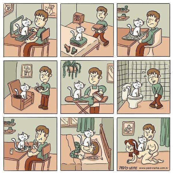Как меняется жизнь, если у вас завелся кот