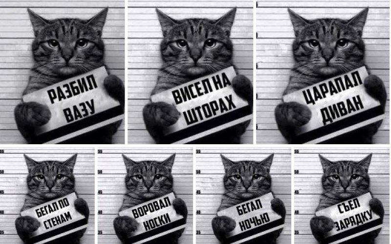 Арестованный кот-наркокурьер сбежал от тульской полиции