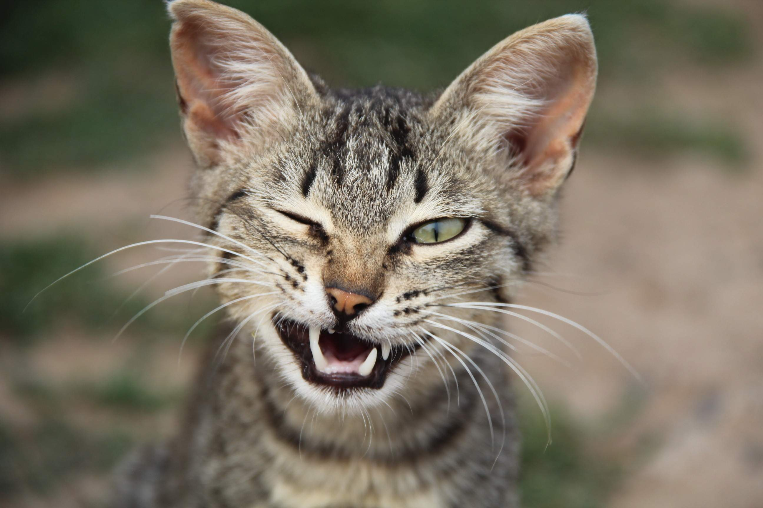 грузовых картинка смешные морды кошек счастливое время, когда