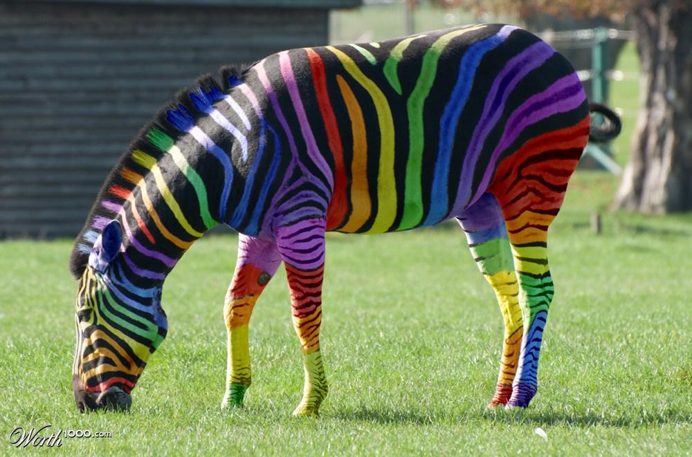 картинка радужная зебра романтичным даром являются