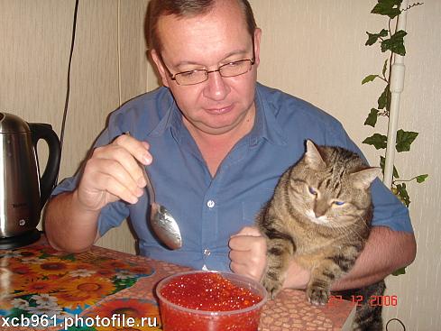 правильное питание кота в таблицах
