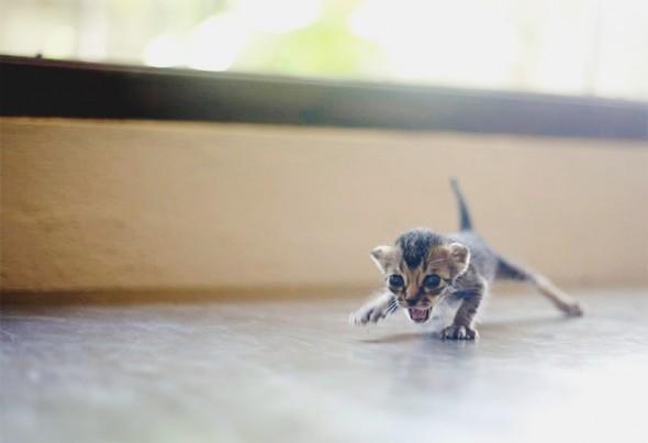 Скачать Игру Про Котенка - фото 3