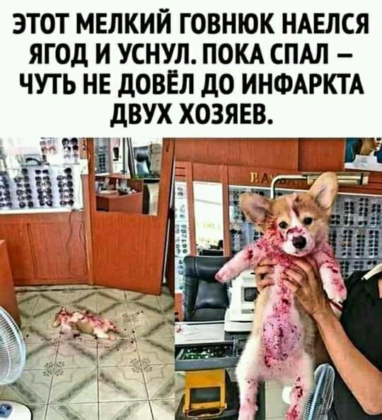 https://s00.yaplakal.com/pics/pics_original/0/3/0/14391030.jpg
