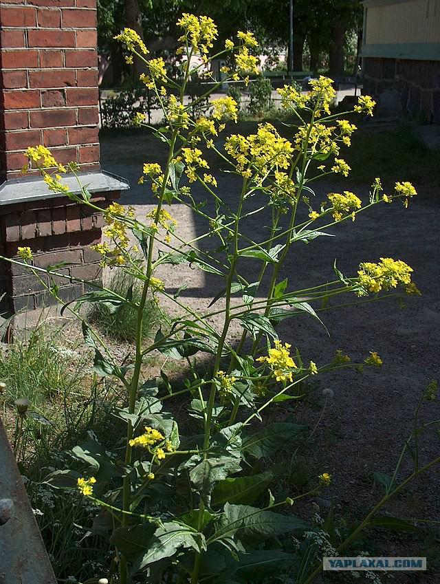 Домашние растения фото описания вкус твоих