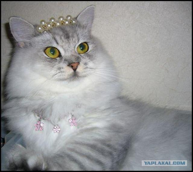 Днем рождения, прикольные картинки с коты с подписями