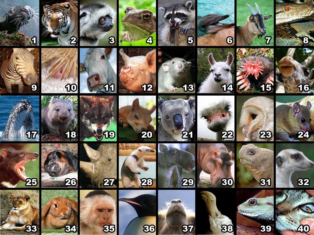 Картинка отгадай животное