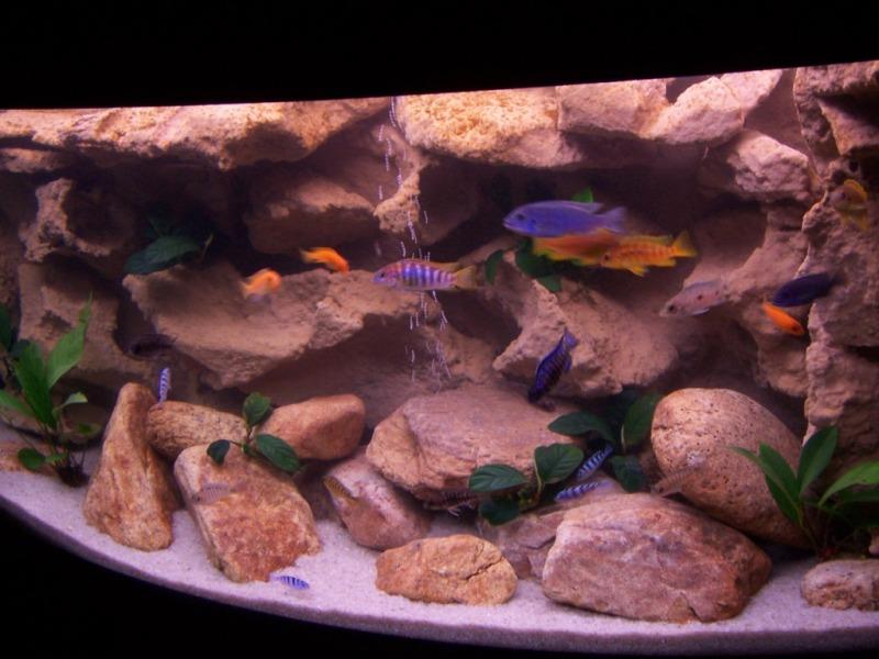 Как сделать задний фон в аквариуме своими руками