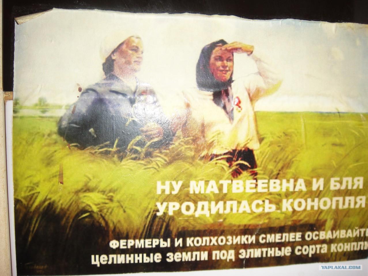 Матвеевна и бля уродилась конопля как снять опьянение от конопли