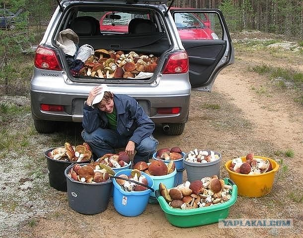 За грибами прикольные картинки