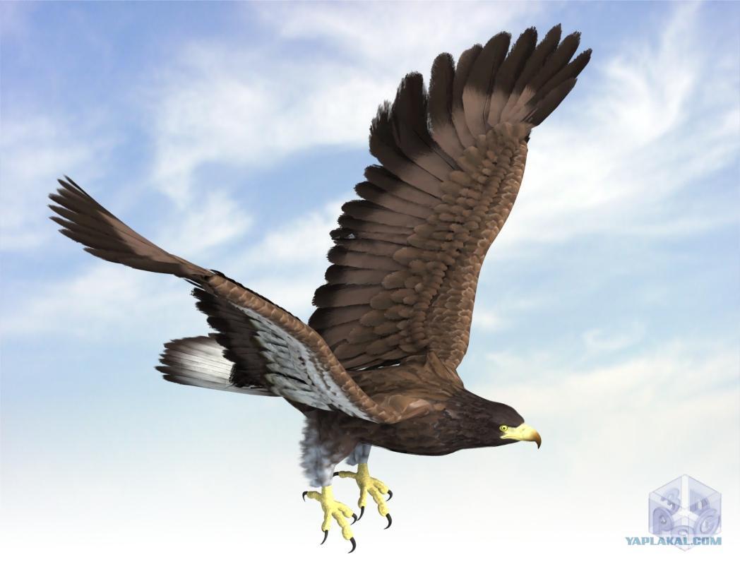 касается орел фото анимация необходимо