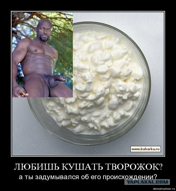 Смешные картинки про творог