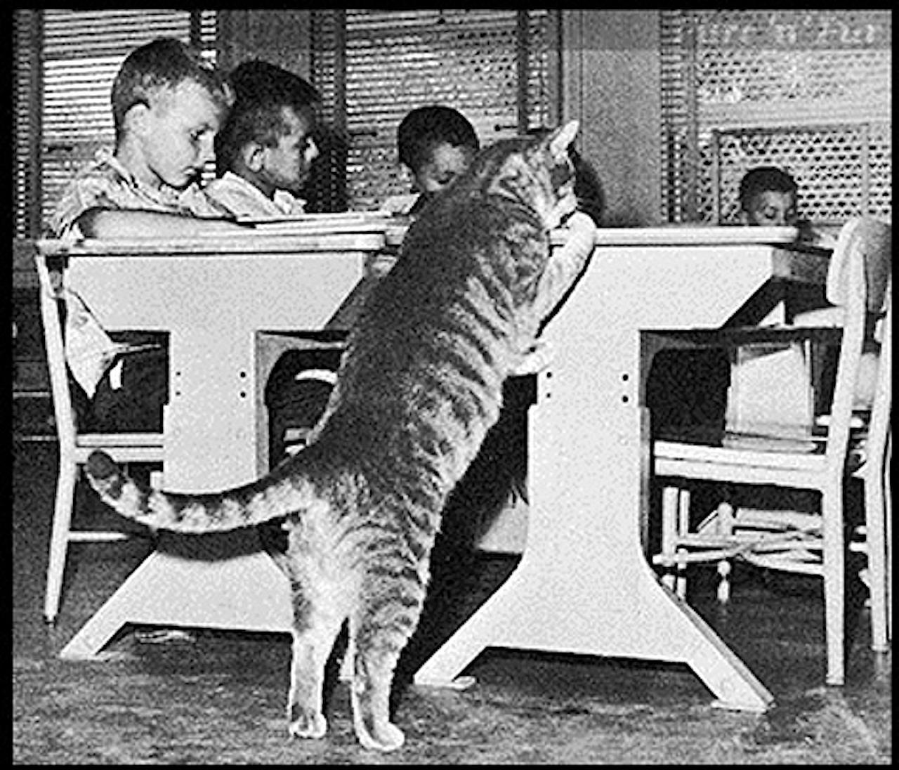 Свого часу історія цього кота вразила весь світ!