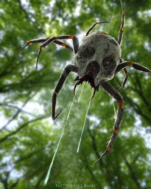 Китаец принял найденного в огороде редкого паука за древнюю печать