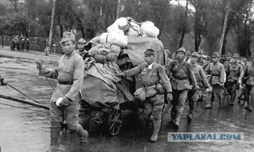 Дисциплина не спасла японскую армию. Маньчжурия 1945 г.