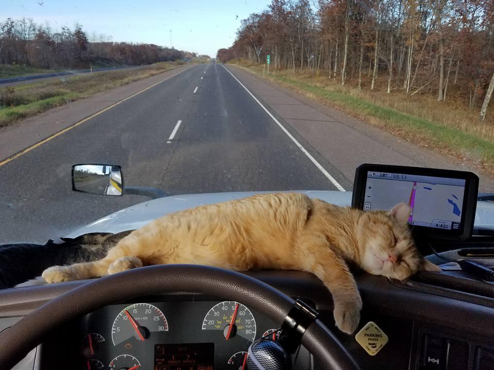 Любимый кот дальнобойщика выпрыгнул из машины, но нашелся через ...