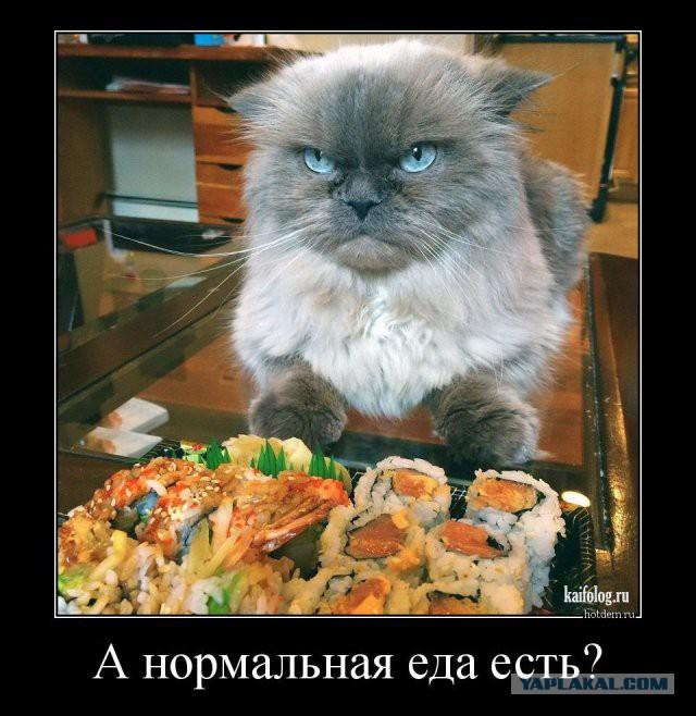 А ты не забыл покормить кота?!