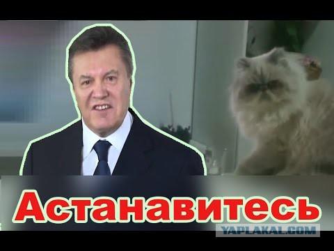 Брат Саакашвили должен покинуть Украину из-за того, что его разрешение на проживание было аннулировано, - МВД - Цензор.НЕТ 7516