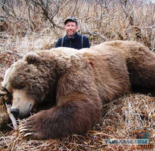 самые большие медведи в мире фото порода пишет, что