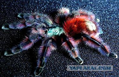Смертоносные домашние животные дамы из Австралии