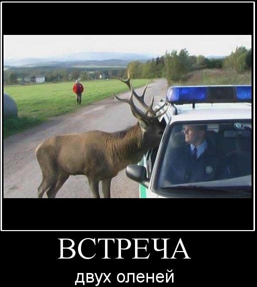 Красивые, смешные картинки про оленей рогоносцев