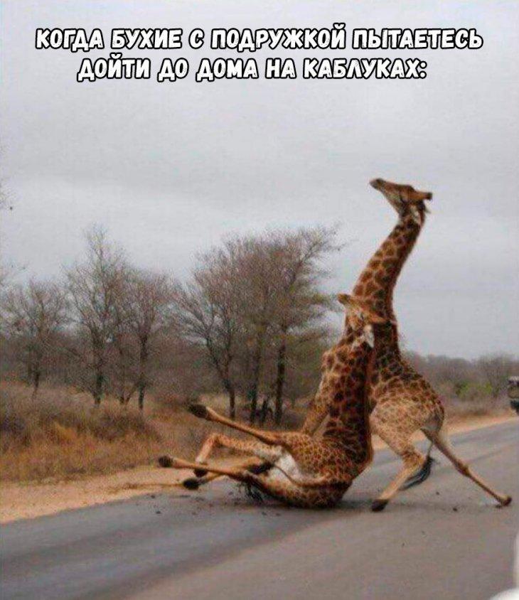 пустельгах, просто картинка с жирафами налейте мне еще проверенная, многие