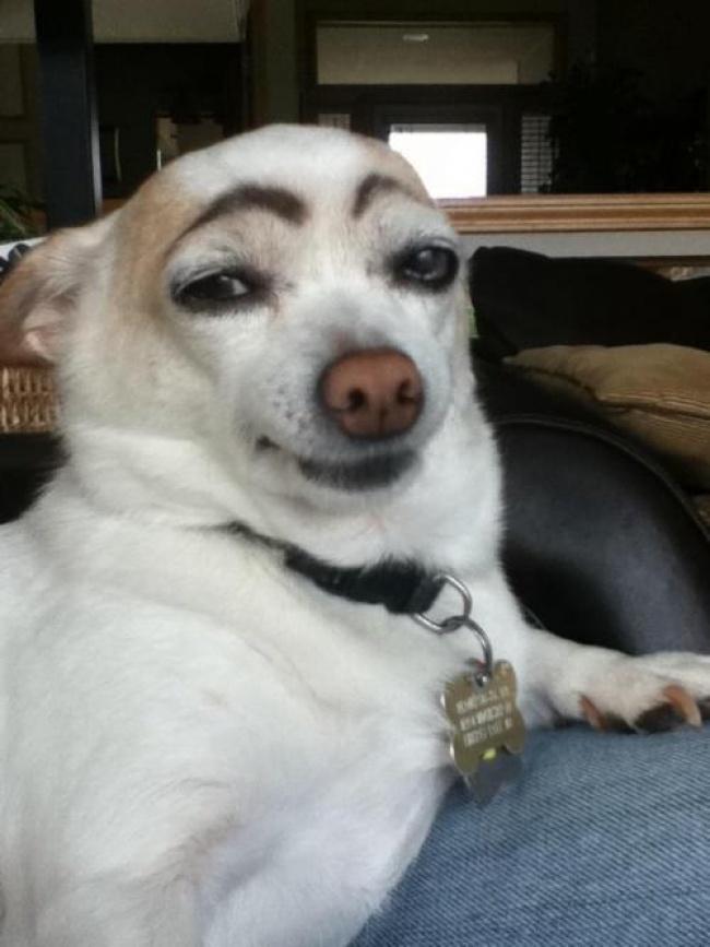 Секси пес