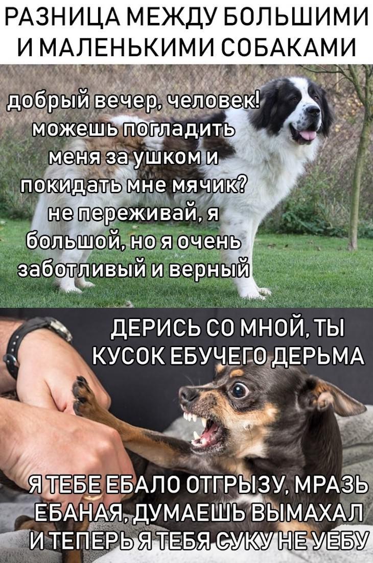 https://s00.yaplakal.com/pics/pics_original/0/7/8/13974870.jpg