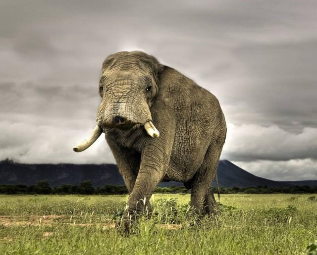 картинки слон без хобота сколько людей
