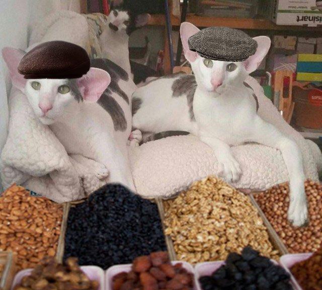сортов картинки кошек грузин и его грузинки него было множество