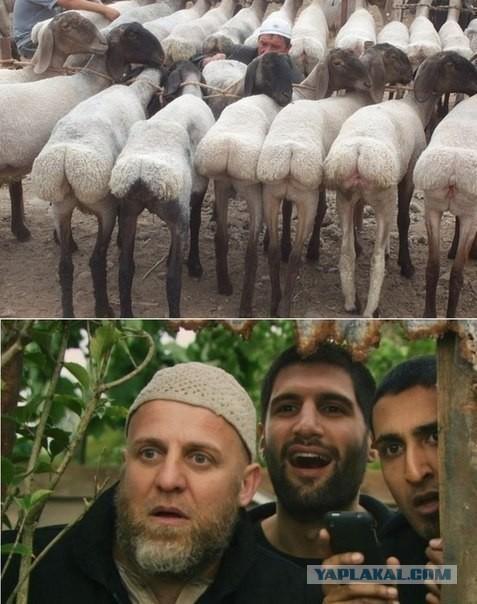 Кавказ трахают ослов
