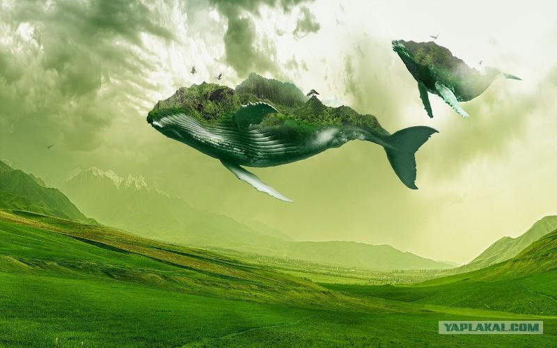 Зеленый кит картинка правильно