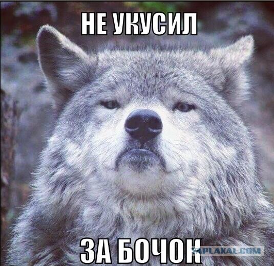 Убил волка охотившегося в городе.