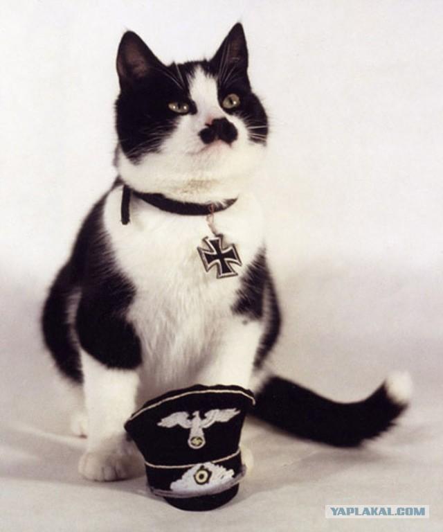 Майдан кот