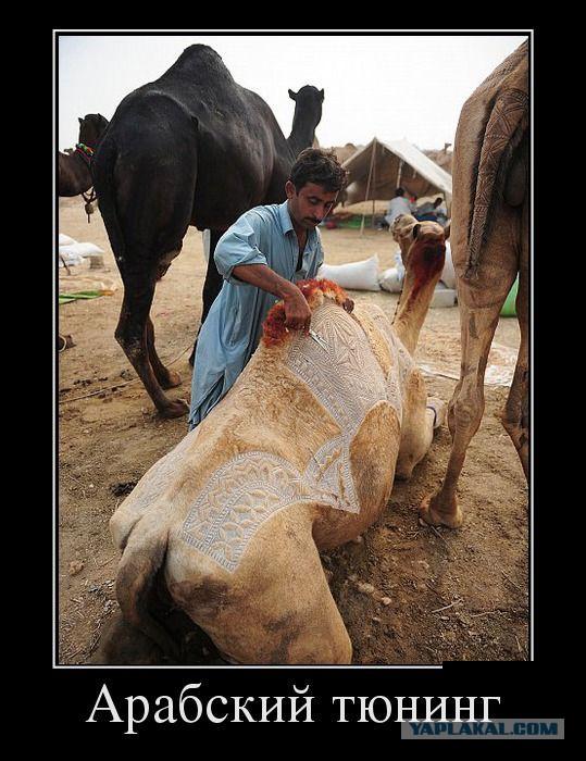 Демотиваторы с арабами
