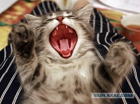 Кивающие коты