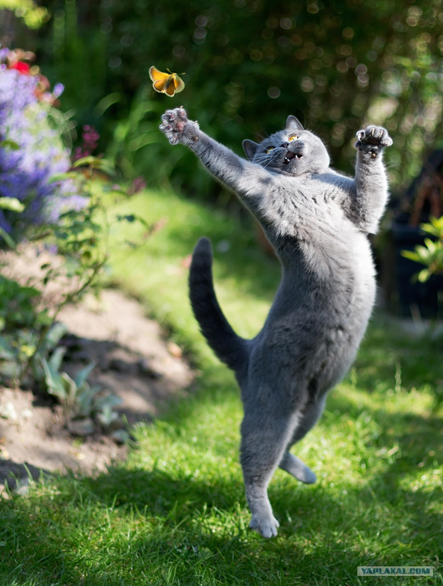 Забавные животные коты картинки