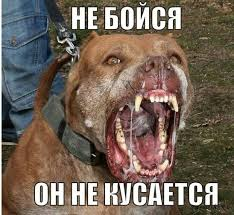 Агрессивная собака покусала ребенка и полицейского
