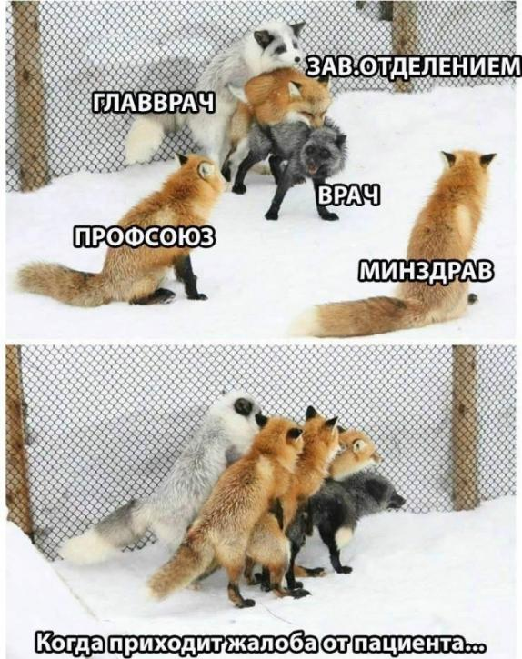 https://s00.yaplakal.com/pics/pics_original/1/2/0/14794021.jpg