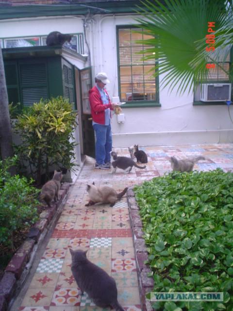 Пятьдесят семь котов Хемингуэя