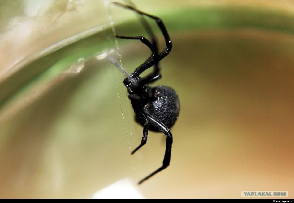 пауки скорпионы