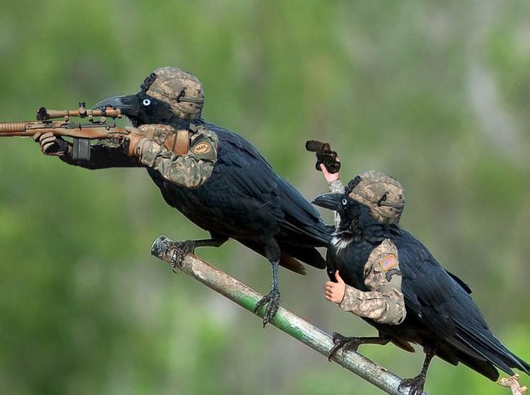 Картинка попугай и ворона