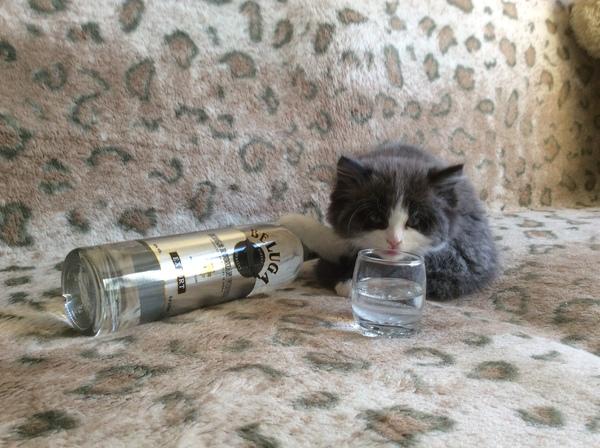 """""""Друг взял у нас котёнка, и я попросил его сделать фотоотчёт, так как волновался, как он там живёт у него"""""""