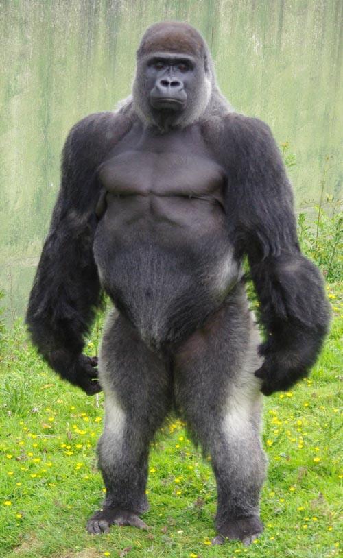 Порно мультфильм горила извращенец