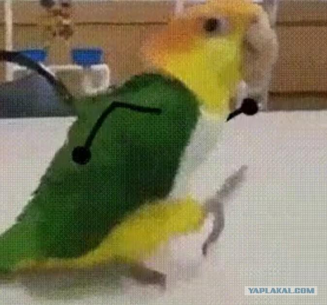 этом гифка попугай когда уходишь в отпуск стоит брать хорошую