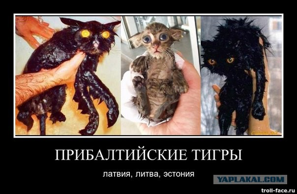 https://s00.yaplakal.com/pics/pics_original/1/5/5/7598551.jpg