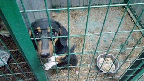 «Собака в приюте. Помогите»
