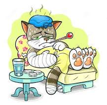 Убитый горем кот больше года живет на могиле хозяйки