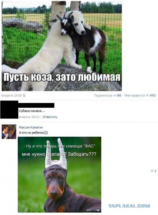 Пусть коза зато любимая картинка