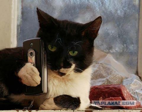 Игры разговаривает кот