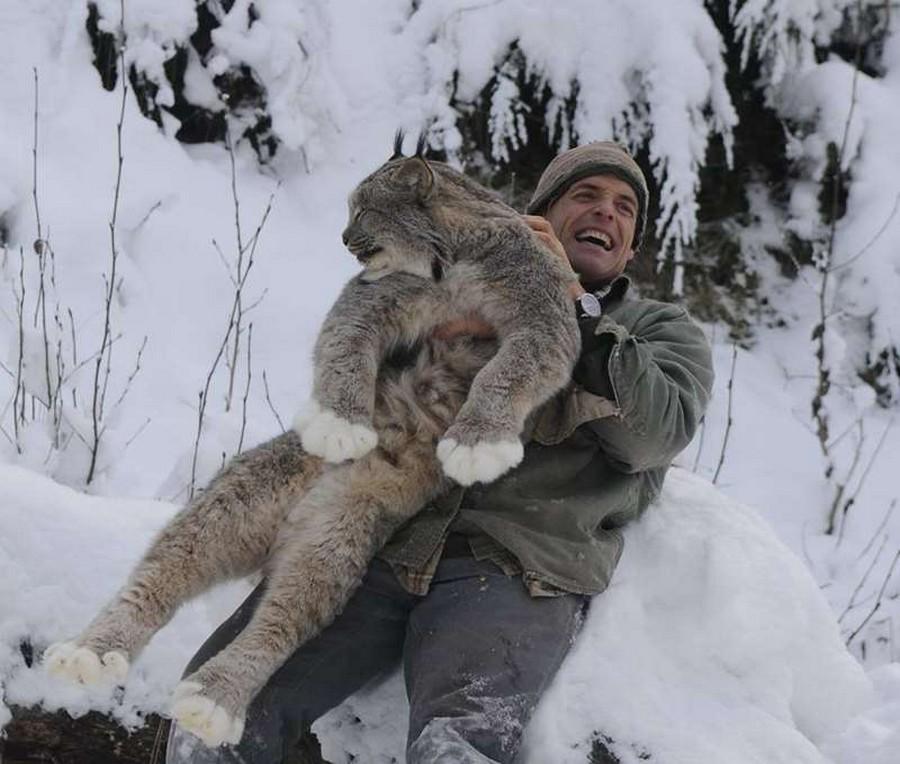 Фото рыси зимой